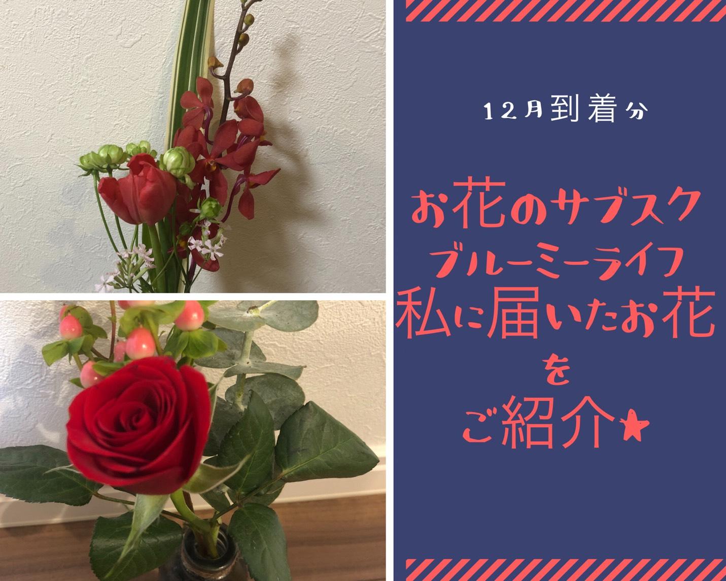 お花のサブスクブルーミーライフ私に届いたお花をご紹介★12月分